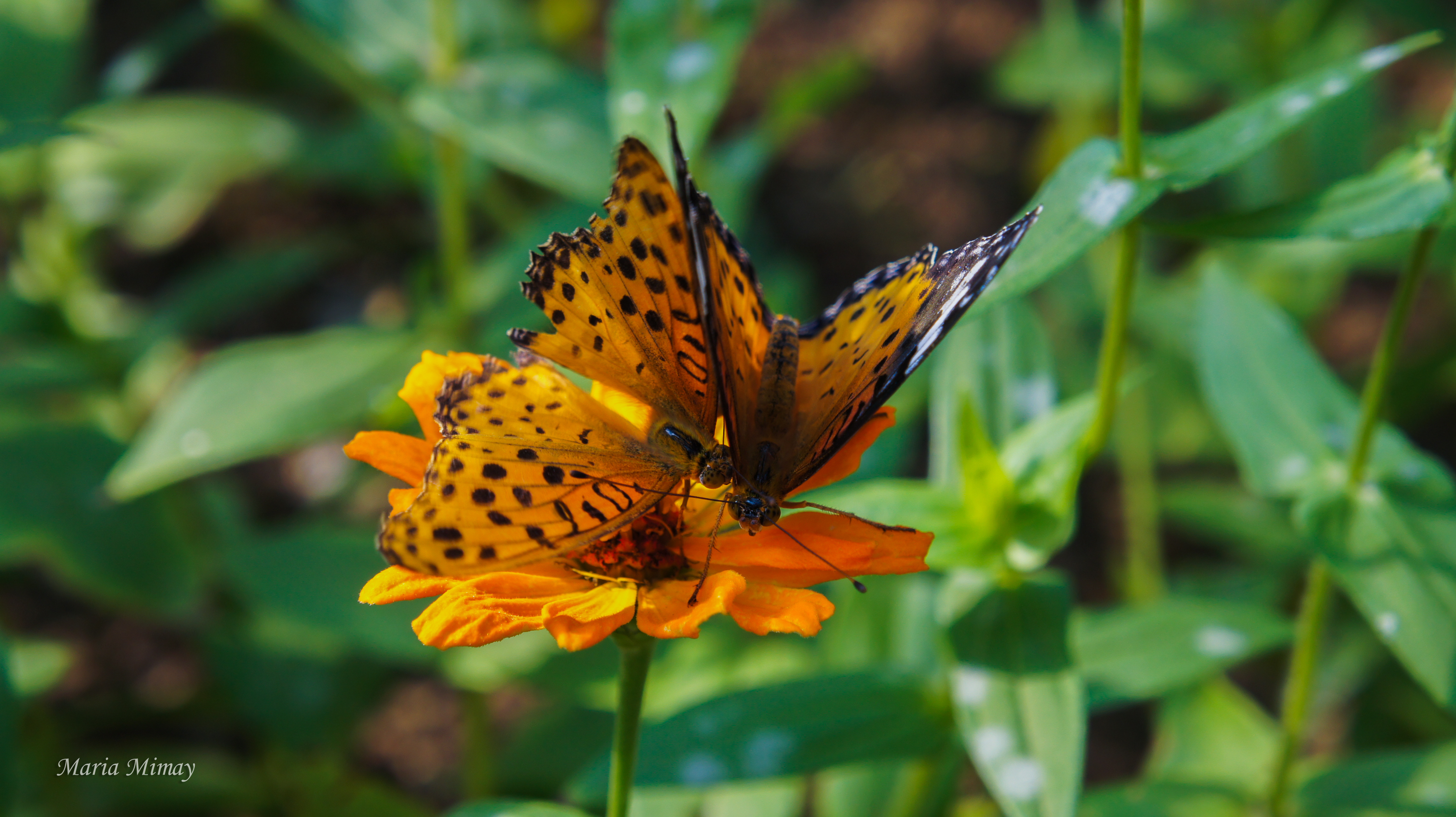 If You Are In Seoul, And Youu0027re A Butterfly Lover Just Like Me, A Visit To  This Butterfly Garden At Seoul Forest Will Be Glorious.