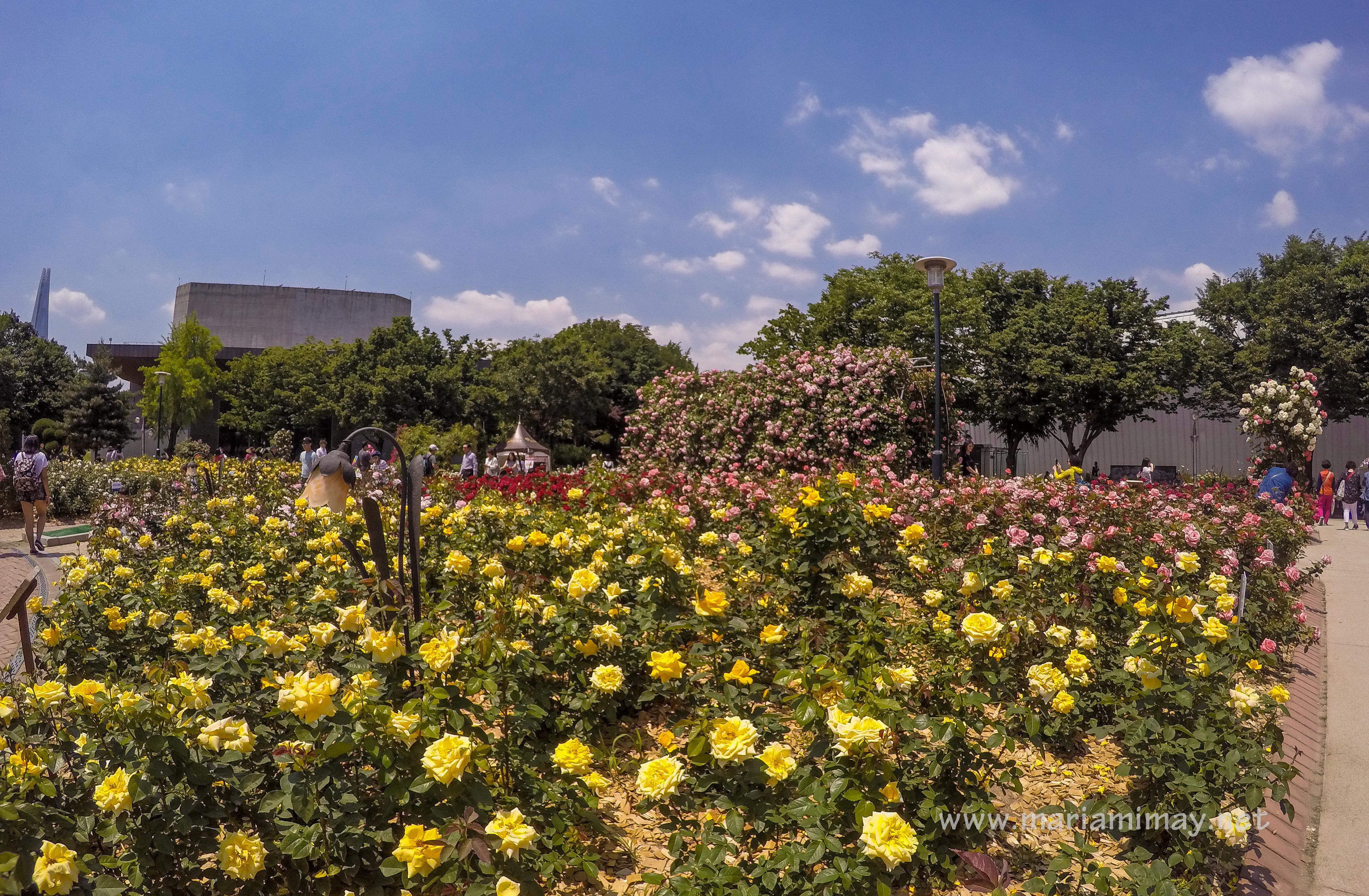 Rose Garden in Olympic Park | When In South Korea